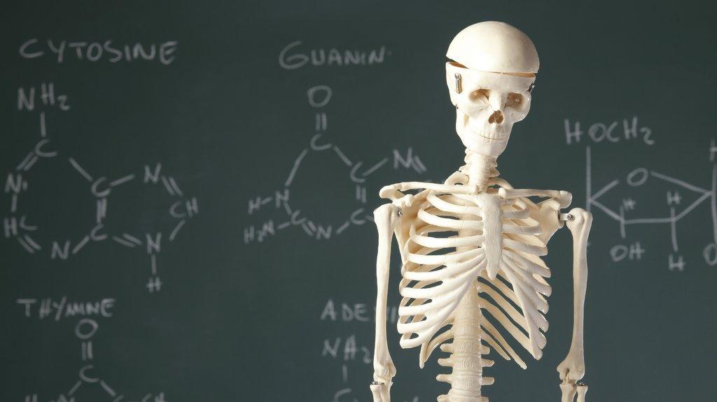 Nu ska du få lära känna kemin i din egen kropp.