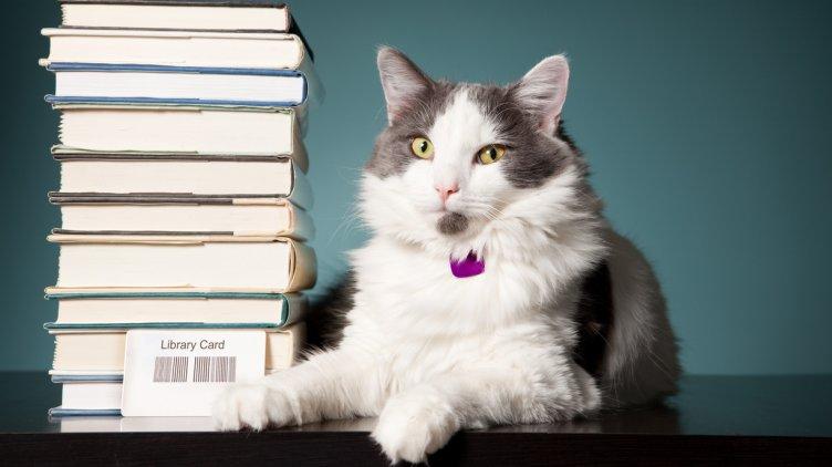 Välkommen till årskurs 7 – Reading comprehension