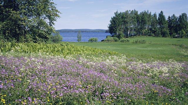 Föreställ dig en äng full med växter och blommor.