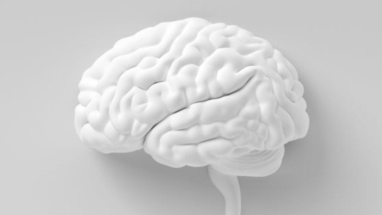 Dina minnen lagras i hjärnan, och du kan påverka hur bra din hjärna lagrar minnen.